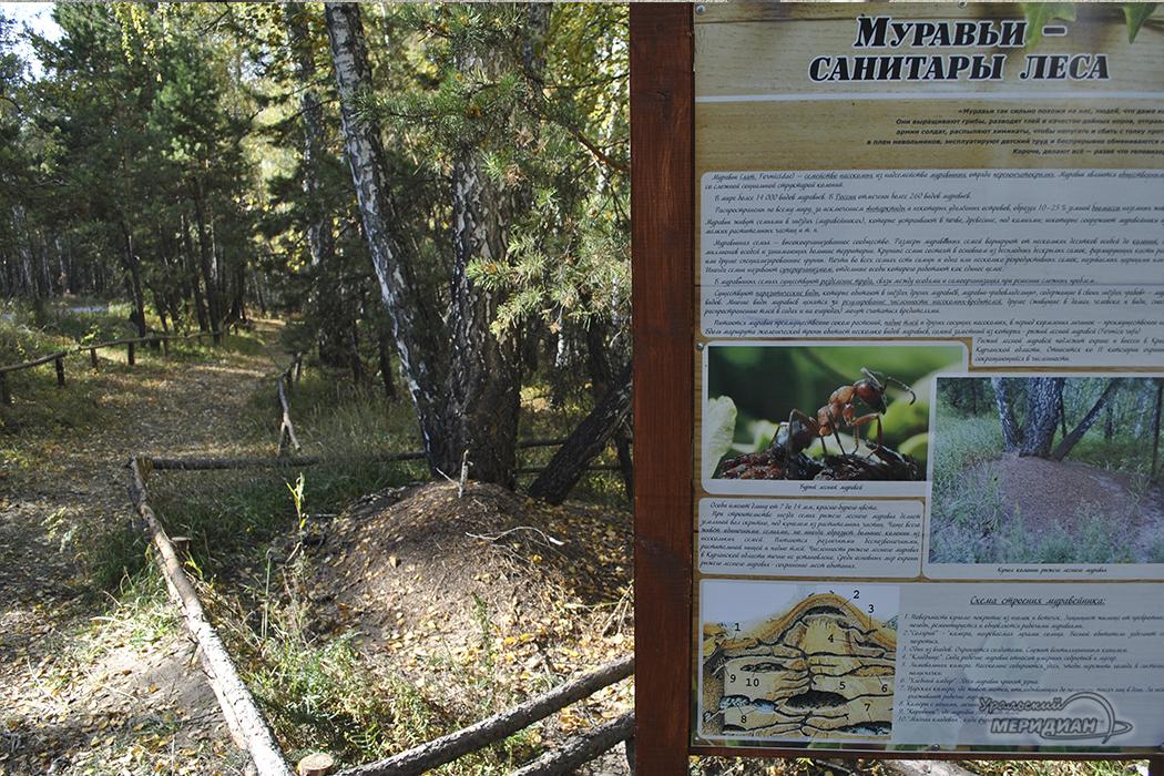 Экологическая тропа Зауральский лес (4)