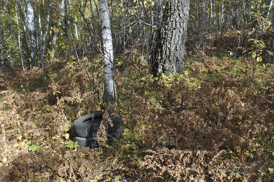 Экологическая тропа Зауральский лес (5)