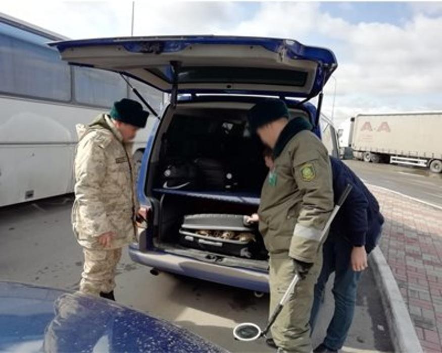 Мужчина пытался перевезти в Челябинск 131 живую черепаху в чемодане
