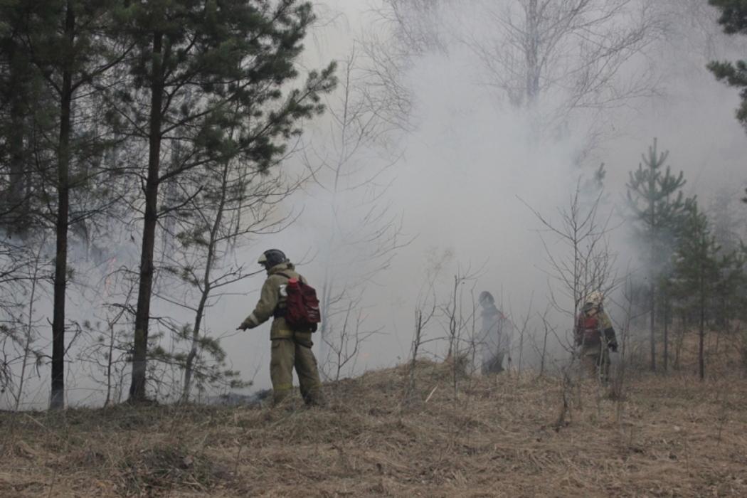 В Челябинской области за 5 дней почти 500 раз горела сухая трава