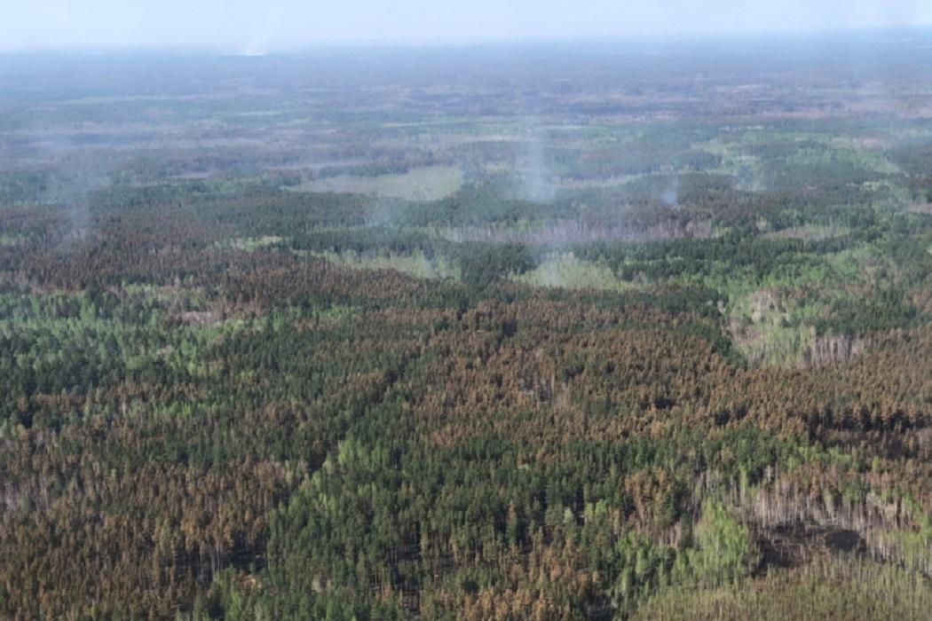 В Зауралье накажут всех причастных к возникновению майских лесных пожаров