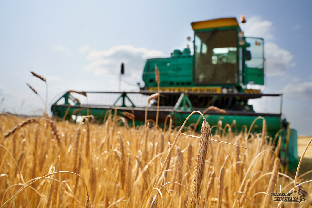 50 представителей за рубежом будут продвигать сельхозпродукцию Зауралья