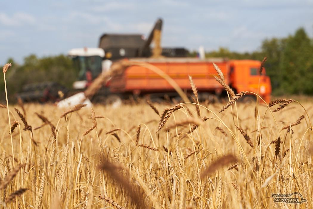 В Курганской области реализуют 20 инвестпроектов в сельском хозяйстве