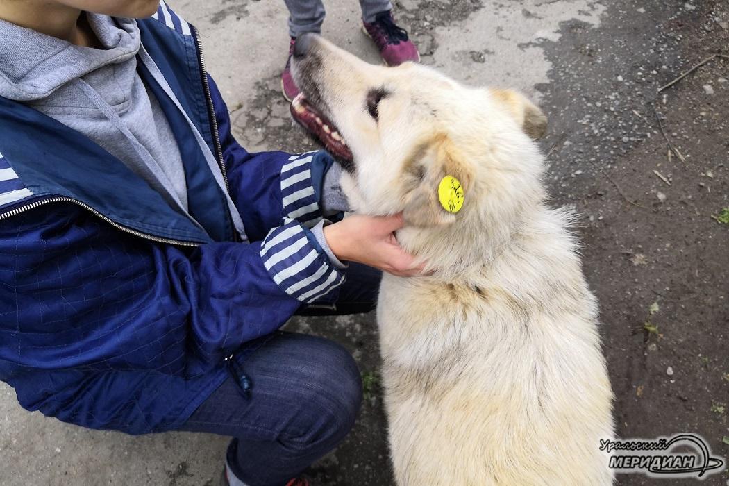 """Пункт временного содержания животных собака человек ЕМУП """"Спецавтобаза"""""""