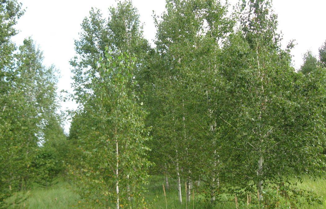 В Зауралье собственников привлекли к ответственности за деревья на пашне