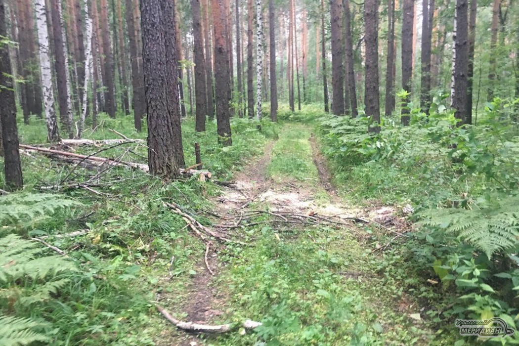 В Юго-Западном лесопарке Екатеринбурга собираются вырубить деревья