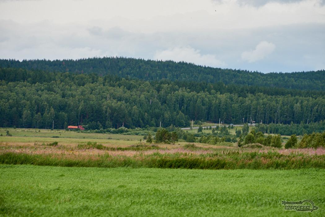 Поле лес летом