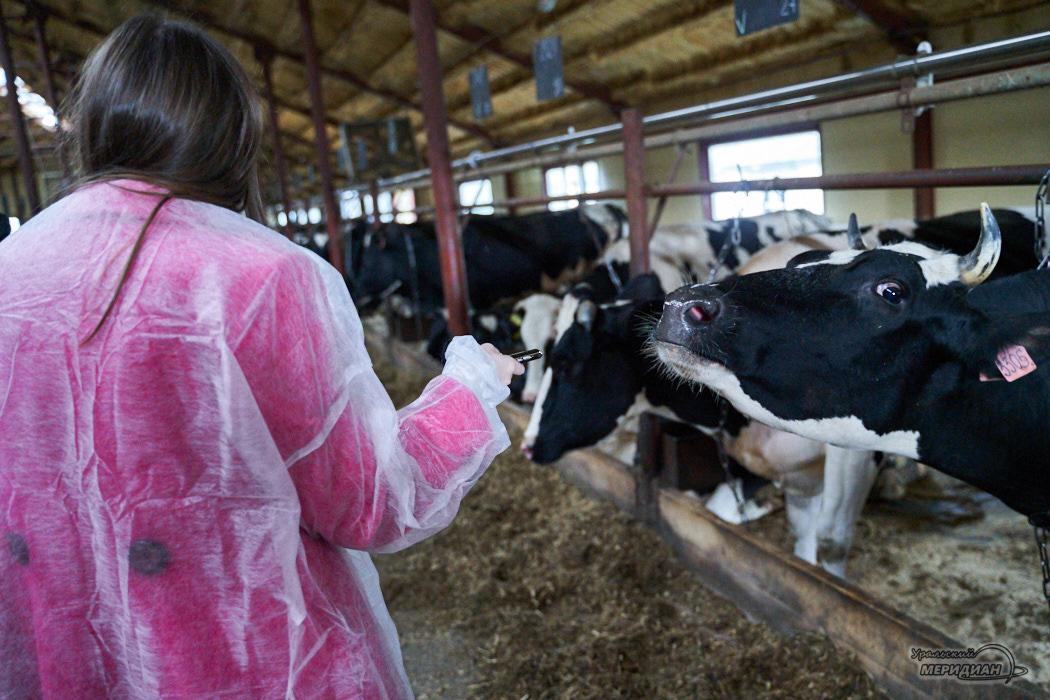 Корова сельское хозяйство животноводство