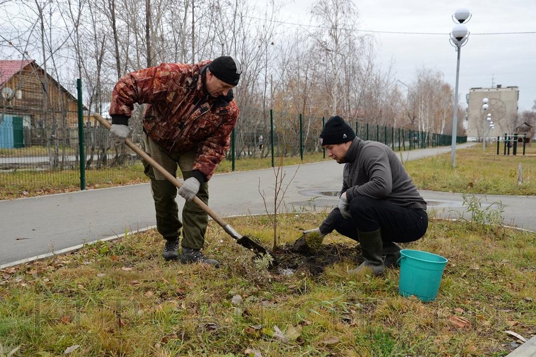 Посадка молодых деревьев