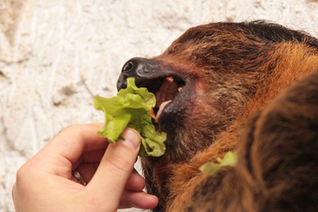В Екатеринбургском зоопарке пройдут показательные кормления животных