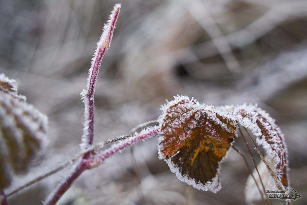 Иней заморозки погода