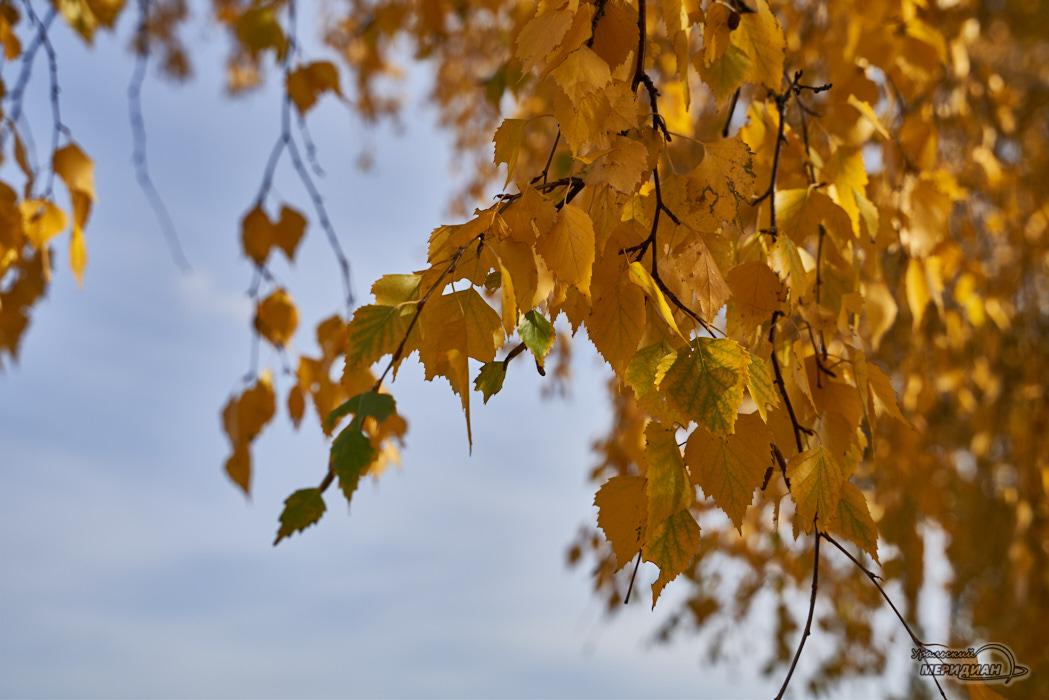 Листья осень