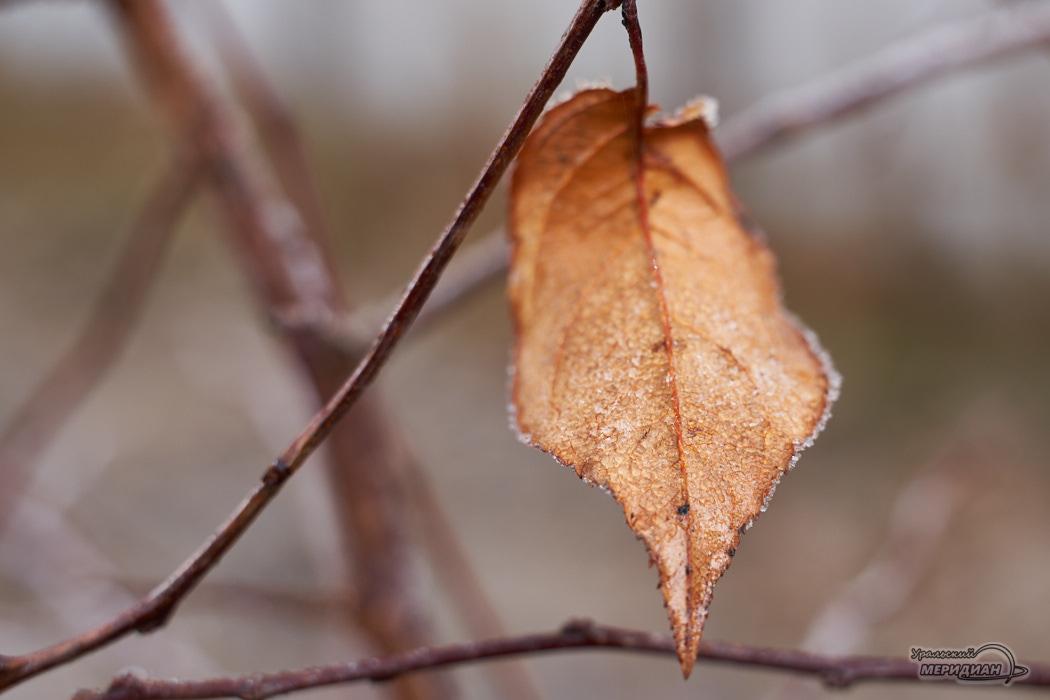 Желтый лист осень иней заморозки погода