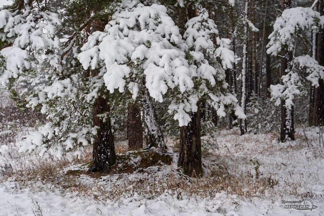 Зима снег погода
