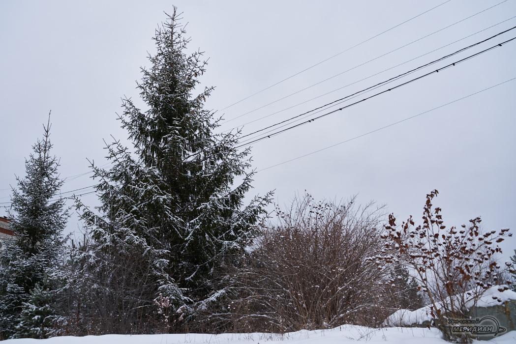Новогодняя ёлка - законно: репортаж из Билимбаевского лесничества