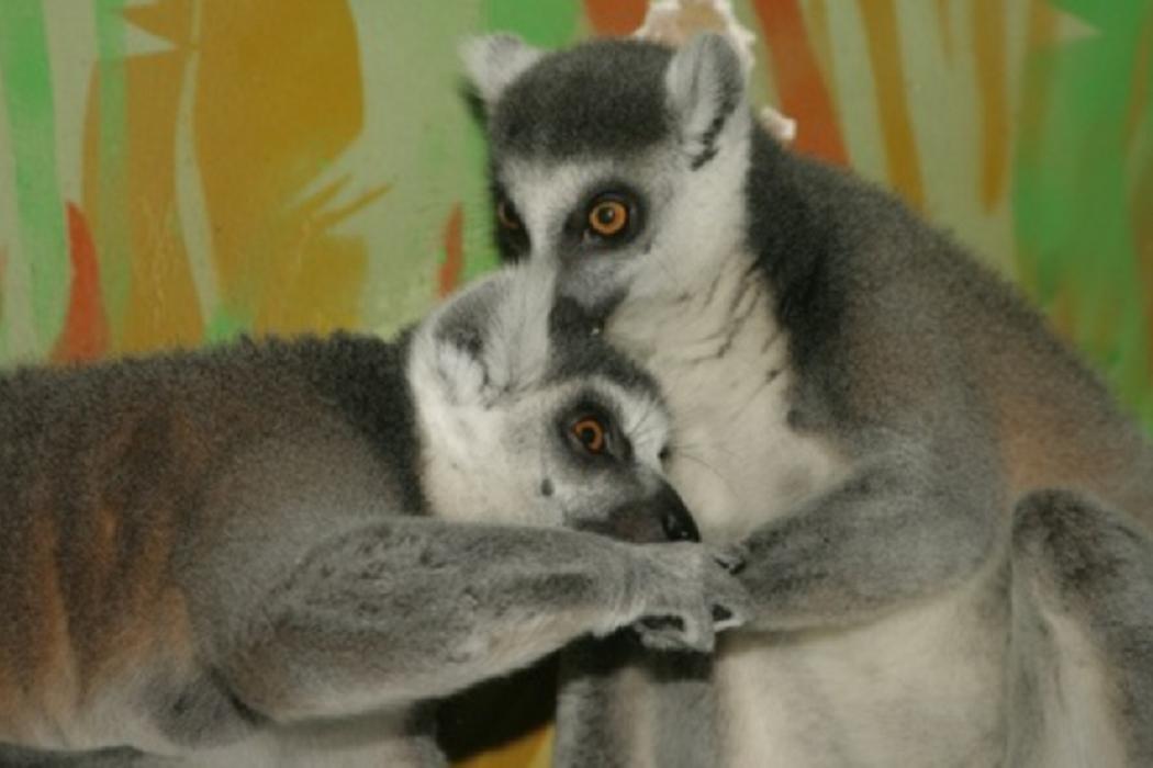 В зоопарке Екатеринбурга расскажут о любовных отношениях в мире животных