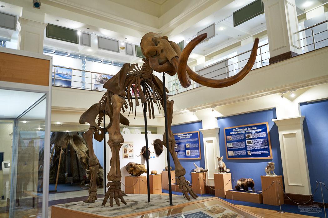 цифровая выставка время мамонтов