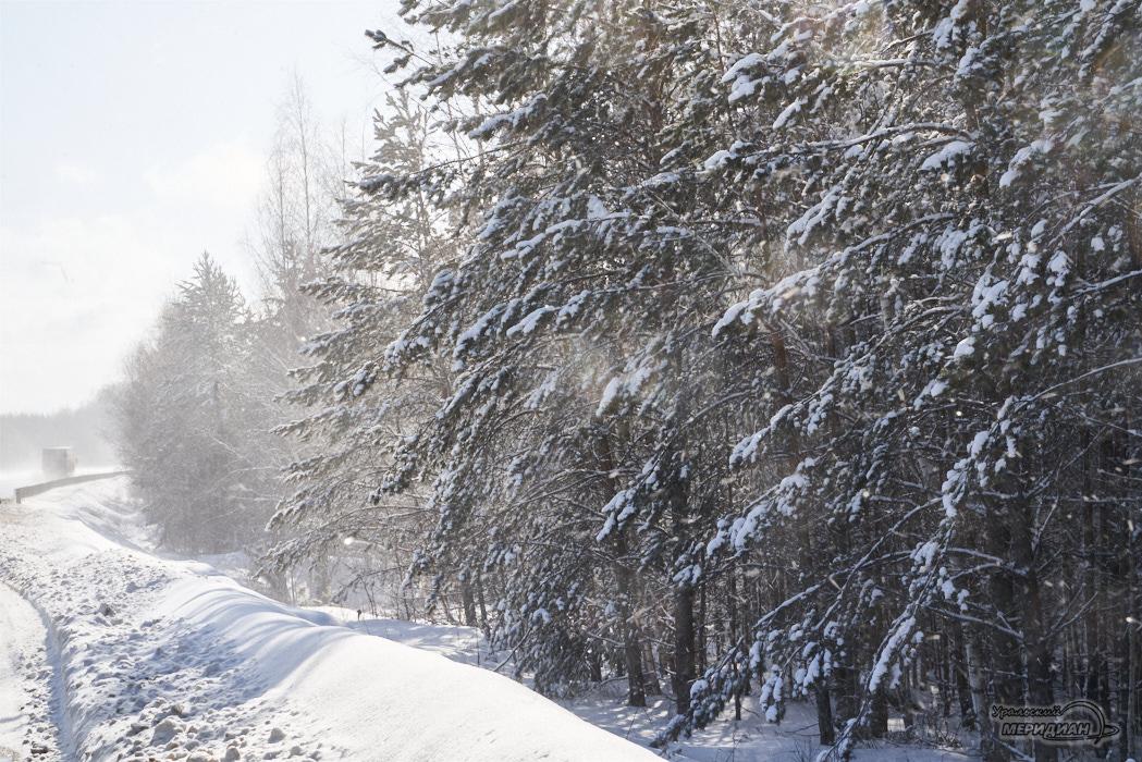 снег деревья