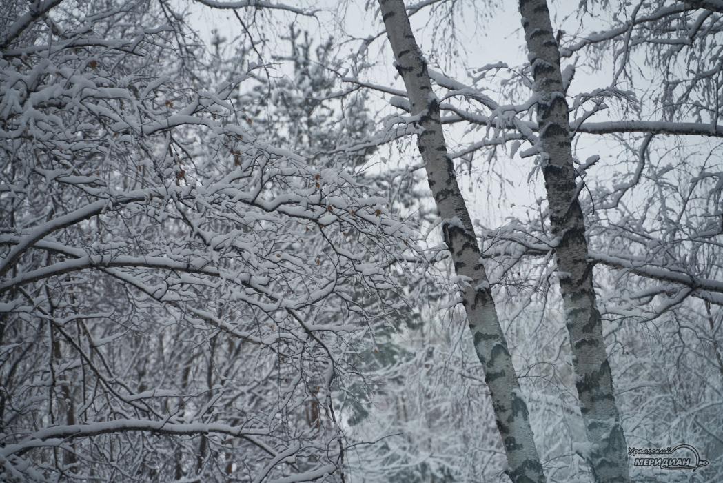 зима снег деревья