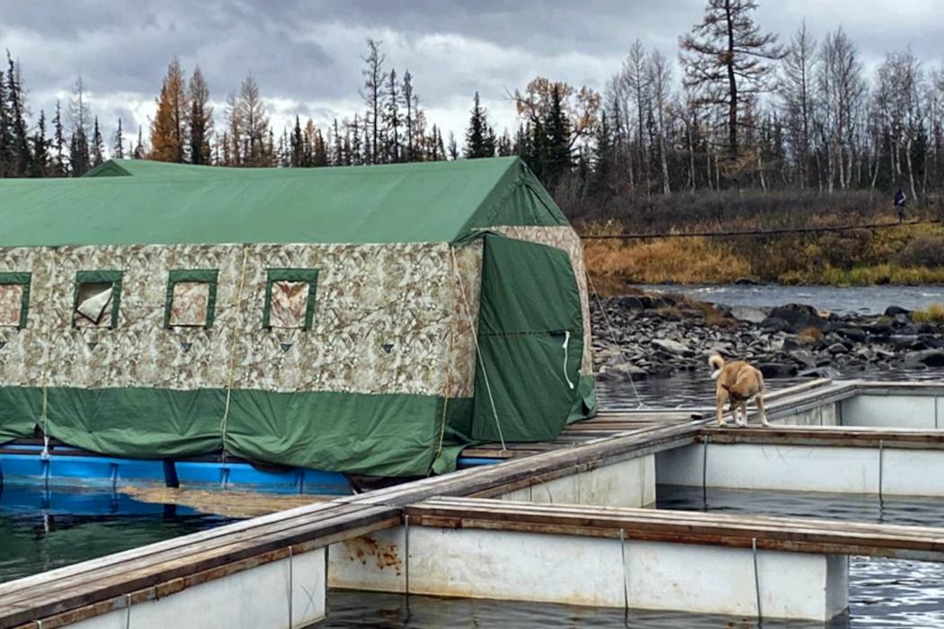 На реке Собь началась нерестовая кампания
