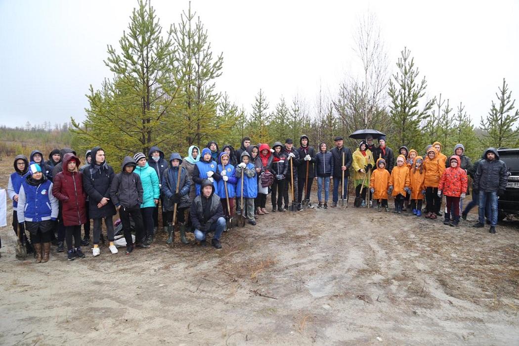 В Ноябрьске высадили более 1000 саженцев кедра 1