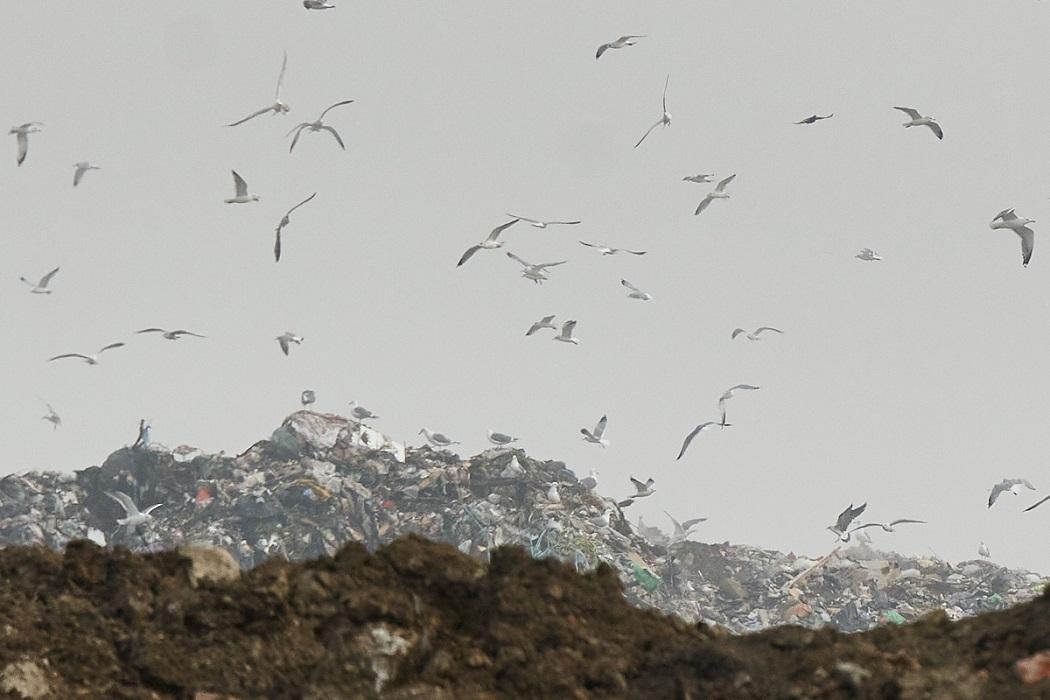 Полиция Верхней Пышмы проверит сортировку мусора на полигоне «Северный»