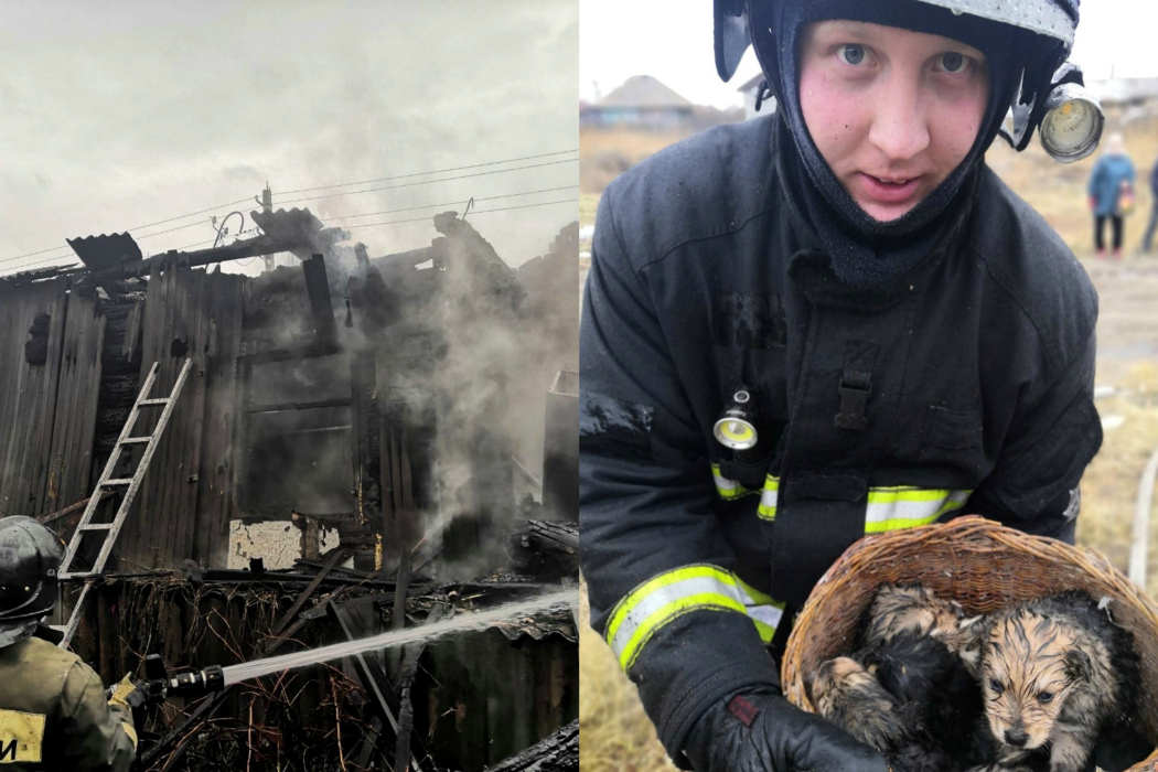 В Челябинской области спасатели нашли в подполе 9 щенят во время пожара
