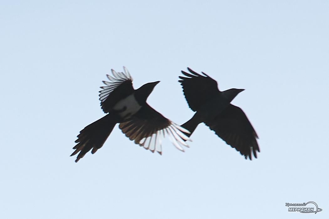 птицы небо