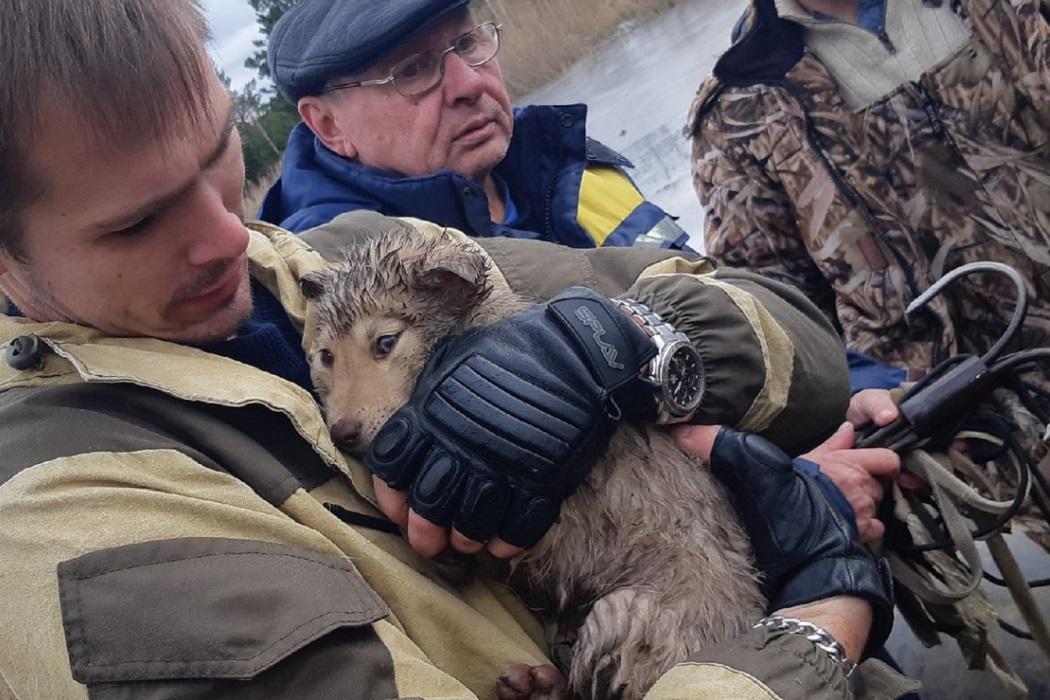 Свердловские поисковики спасли четырёх щенят