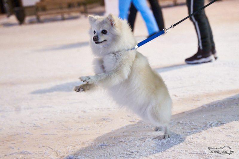 Животные собака