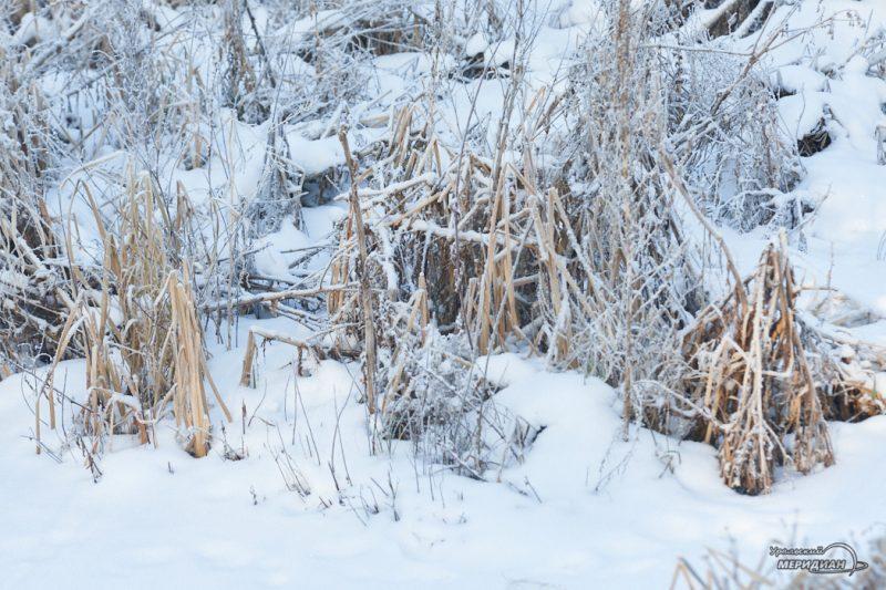 Зима снег мороз погода природа