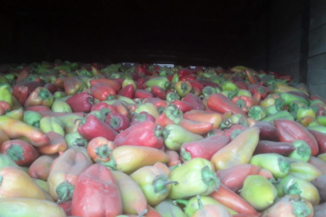 В Курганской области задержали 10 тонн перца, следовавшего в Омск