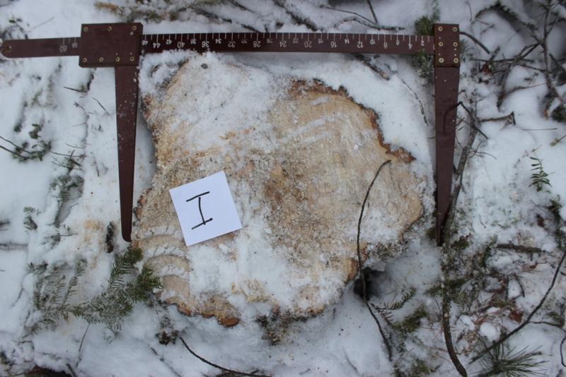 Екатеринбуржцу грозит срок за незаконную рубку леса в Тюменской области 1