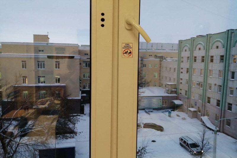 В Челябинской областной больнице запретили кормить голубей