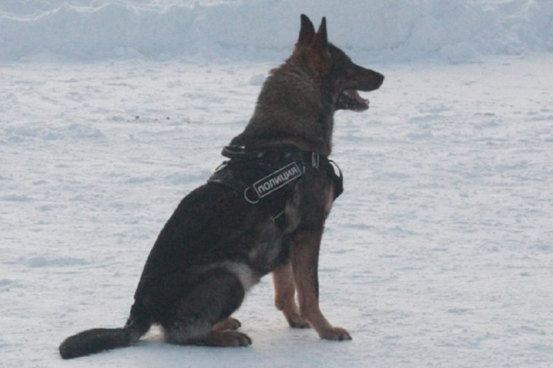 На Урале служебные собаки помогли раскрыть 1283 преступления