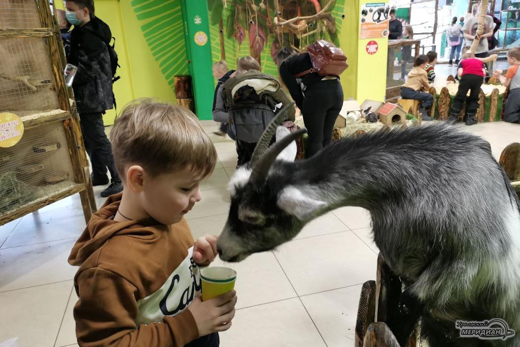 коза зоопарк животные