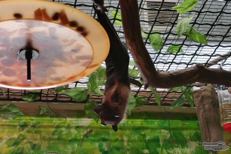 Летучая мышь зоопарк