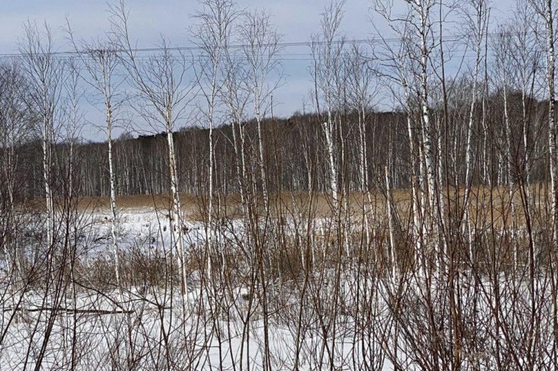 Расширение полигона «Северный» ставит под угрозу реку Крутиху