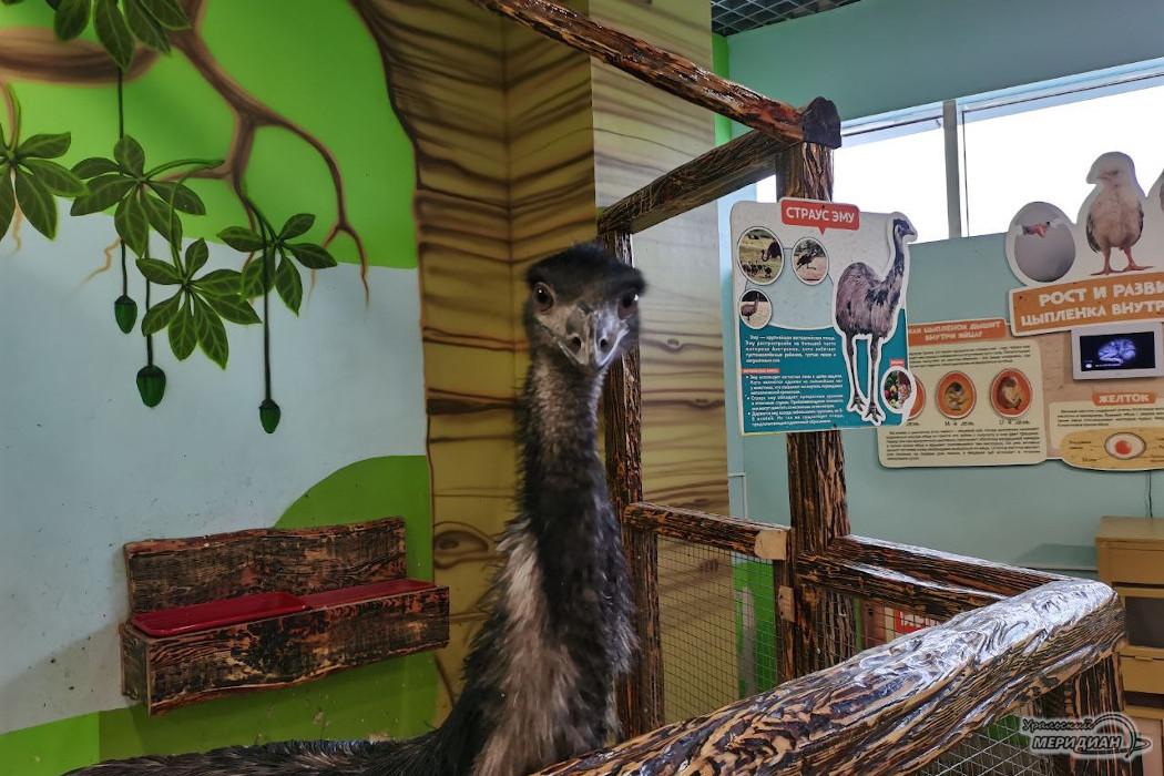 страус зоопарк животные
