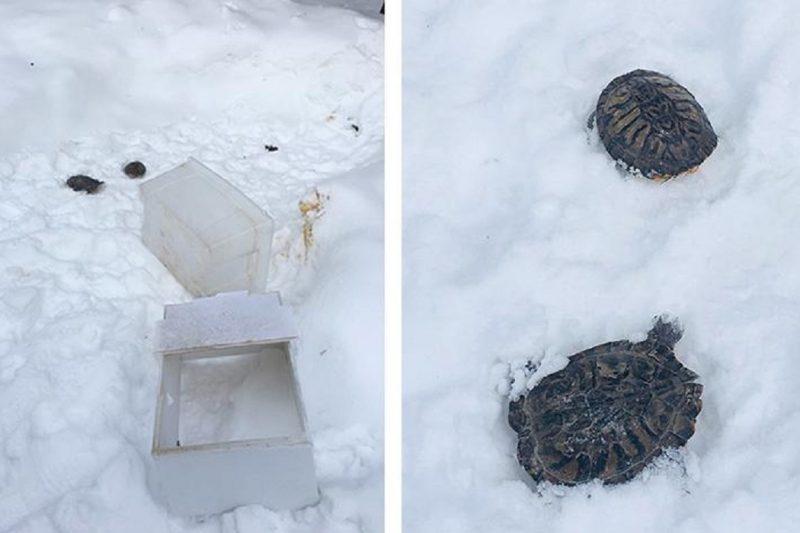 В Ноябрьске в лесу нашли мертвых домашних черепах