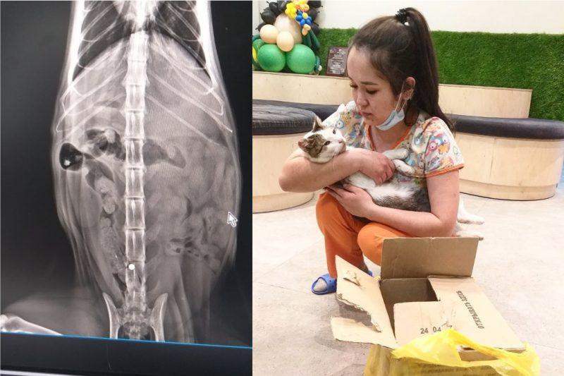 Челябинские ветеринары спасли кота с пулей в спине