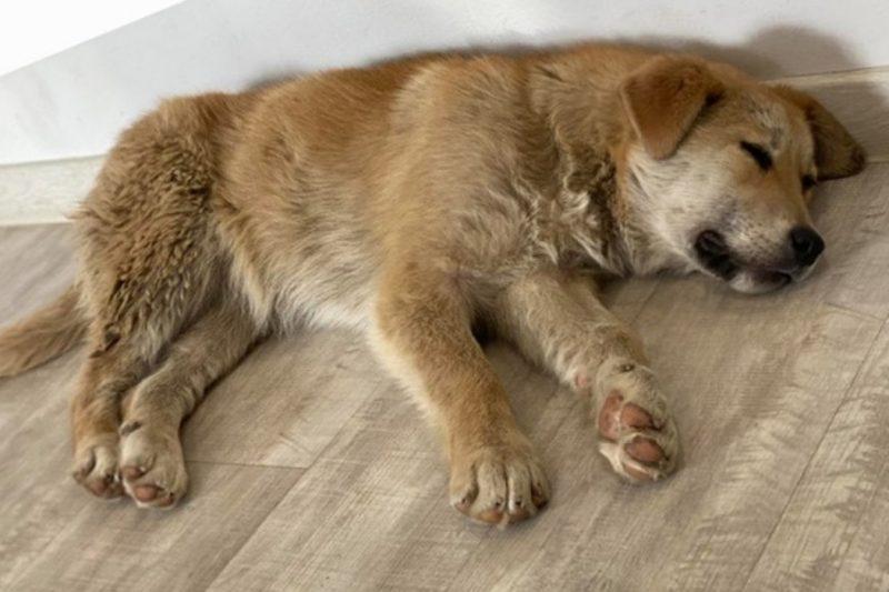 В Тюмени догханетры накормили щенка мясом с гвоздями