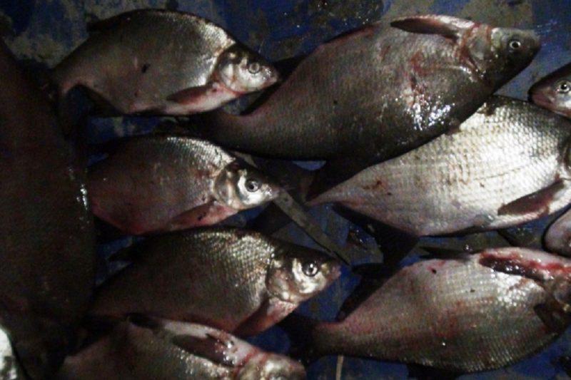 В Тюмени осудят браконьера за незаконный вылов рыбы