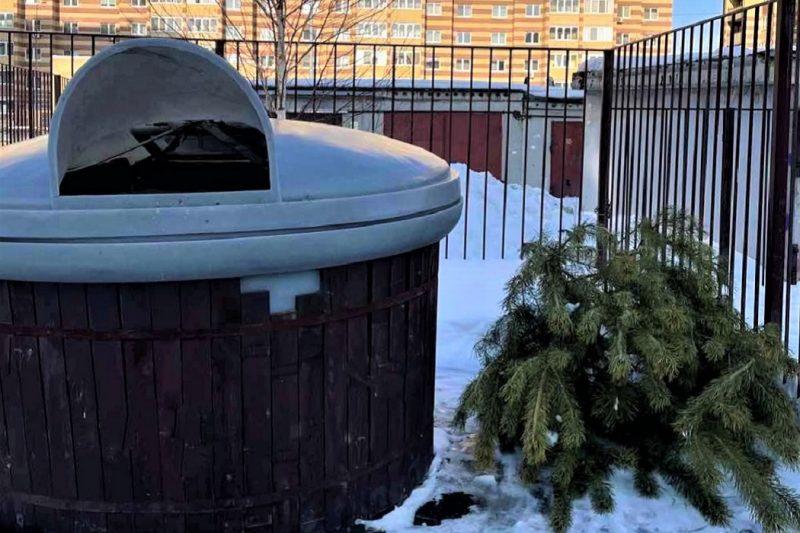 Жители Тюмени продолжают выбрасывать елки