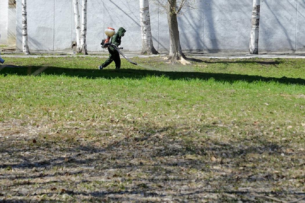 В Кургане общественные территории обрабатывают против клещей