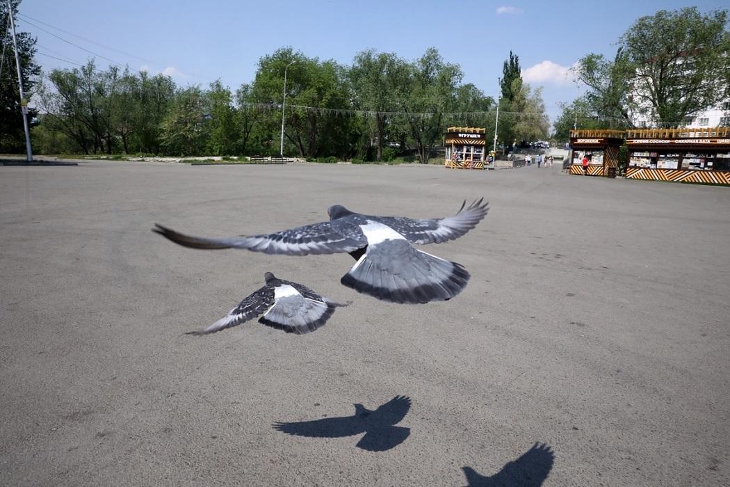 Голуби + птицы + городской парк + сквер + Курган + ларьки + лето + люди