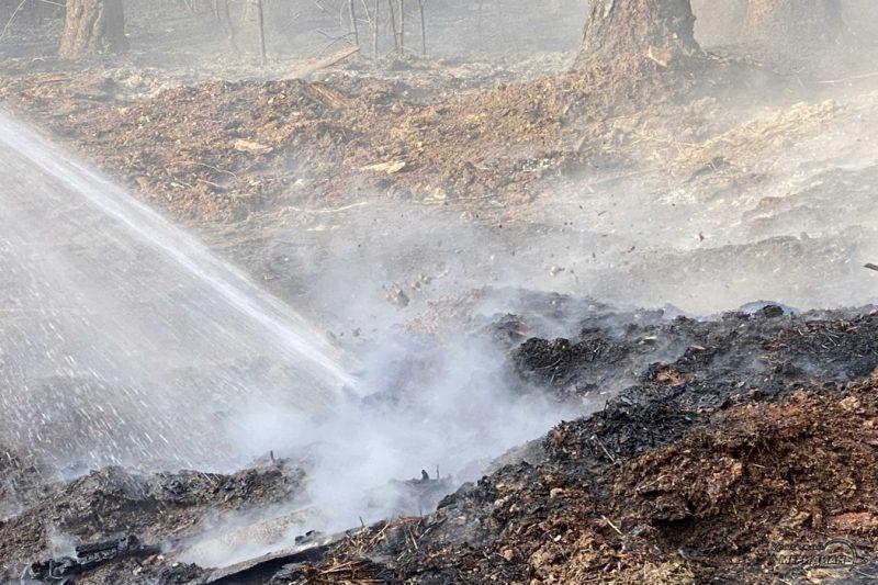 Тушение пожара в лесу