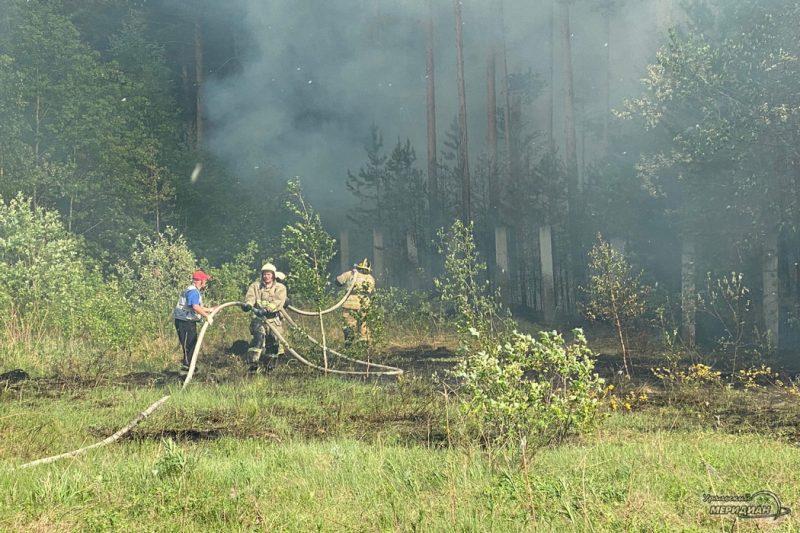 Тушение пожара в лесу мчс шланг