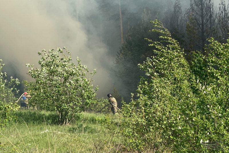 Тушение лесного пожара мчс дым