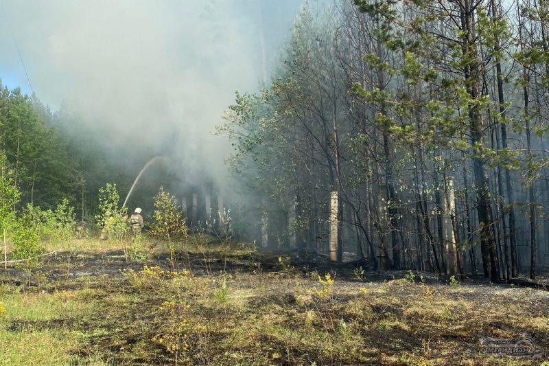Тушение пожара в лесу дым